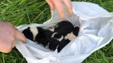 PICTURES: Puppies left dangling for dead above a river