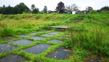 Nature's advance and the business case: Can compromise be found at Maghera High School?