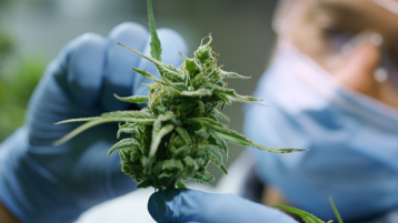 Derry patients can apply to take part in medical cannabis trial
