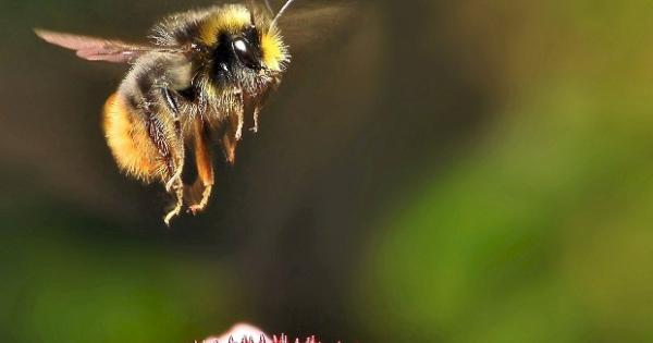 Buzz in the air as council implements plan to make bees a 'priority species'