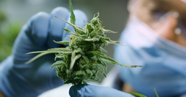 'Medicinal cannabis should be freely available to all those that need it'
