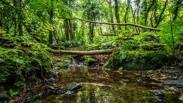Photo of Prehen Wood by Ben Lee, WTML
